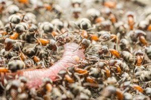 Pest Control Templestowe
