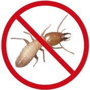 Pest Control Doncaster