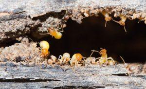 Pest Control Greensborough